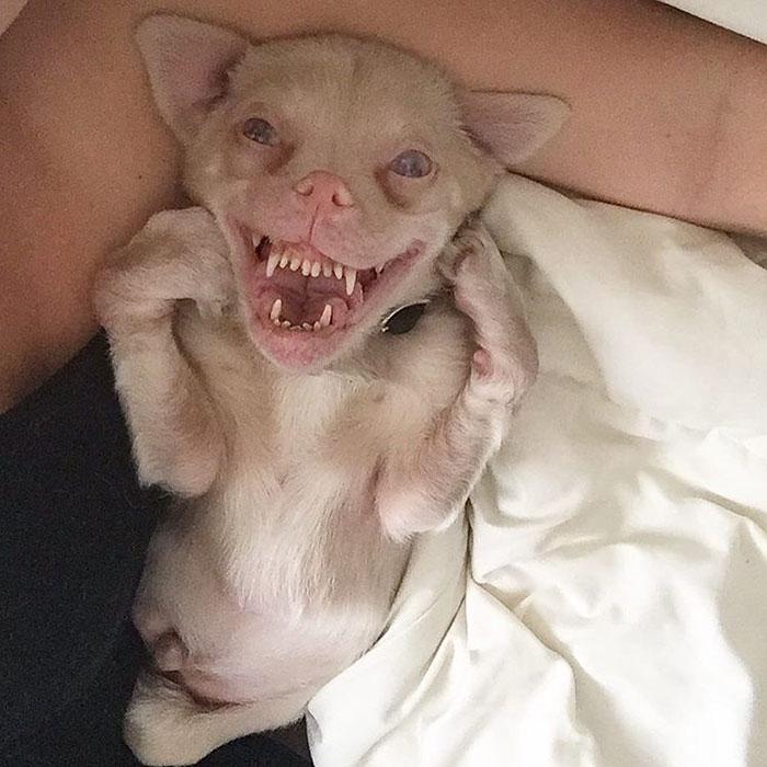 adorable-bat-dog-special-needs-taking-instagram-smile-1