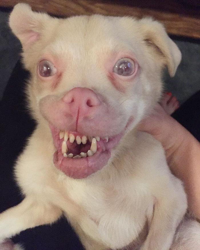 adorable-bat-dog-special-needs-taking-instagram-smile-2