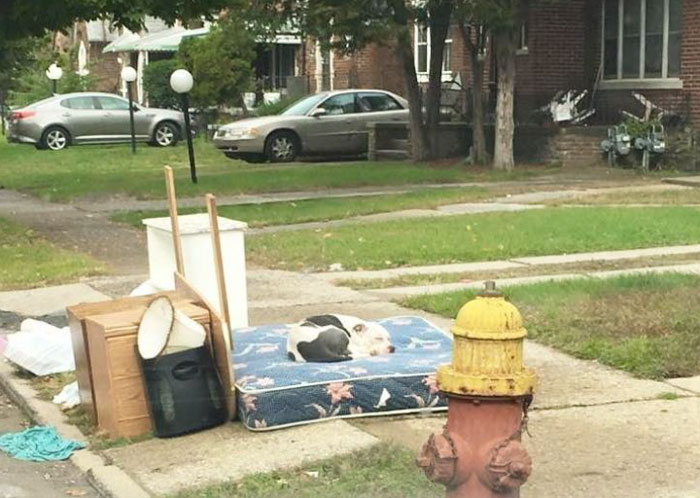 left-dog-mattress-boo-1