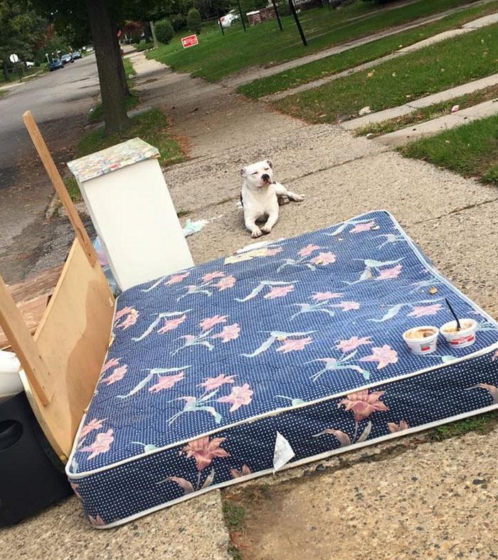 left-dog-mattress-boo-3