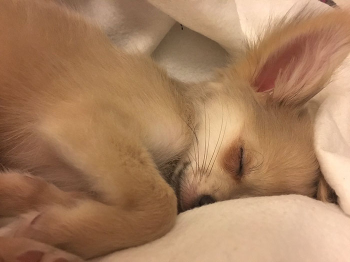 new-revelation-made-people-cry-dogs-dream-about-their-humans-while-they-sleep-1