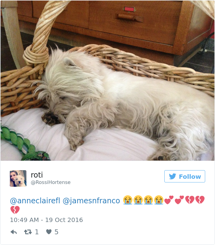 new-revelation-made-people-cry-dogs-dream-about-their-humans-while-they-sleep-4