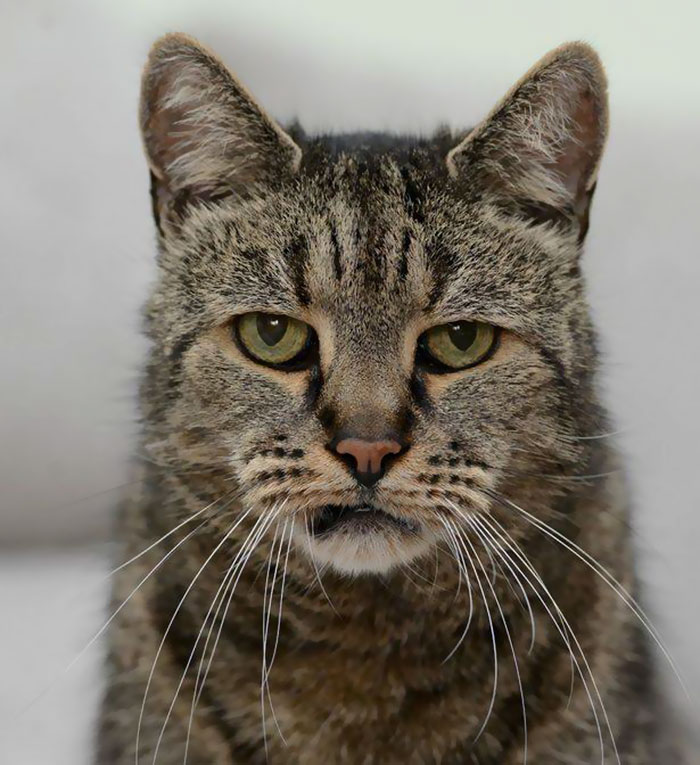 the-worlds-oldest-cat-has-just-celebrated-his-31st-birthday-2