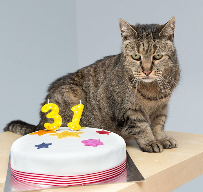 the-worlds-oldest-cat-has-just-celebrated-his-31st-birthday-4