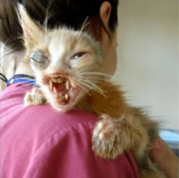 7-year-old-girl-saves-a-disfigured-kitty-nobody-wanted-2