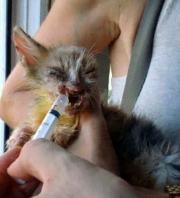 7-year-old-girl-saves-a-disfigured-kitty-nobody-wanted-5