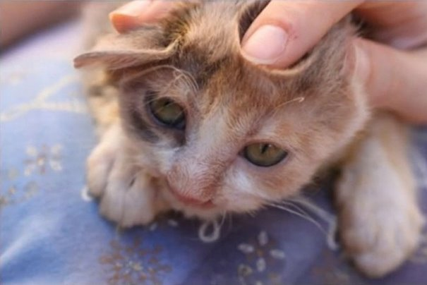 7-year-old-girl-saves-a-disfigured-kitty-nobody-wanted-6