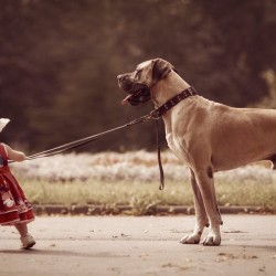 little-kids-big-dogs-photography-andy-seliverstoff-24-584fa92ca8a9c__880.jpg