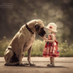 little-kids-big-dogs-photography-andy-seliverstoff-26-584fa930ad1a9__880.jpg