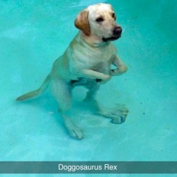 funny-dog-snapchats-13-581ae586d2078__700