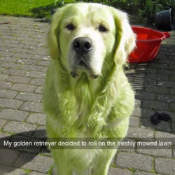 funny-dog-snapchats-80-581b05b727260__700