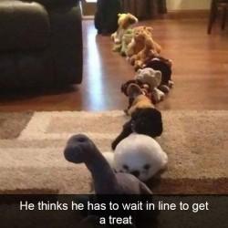 funny-dog-snapchats-94-581b3267d655e__700