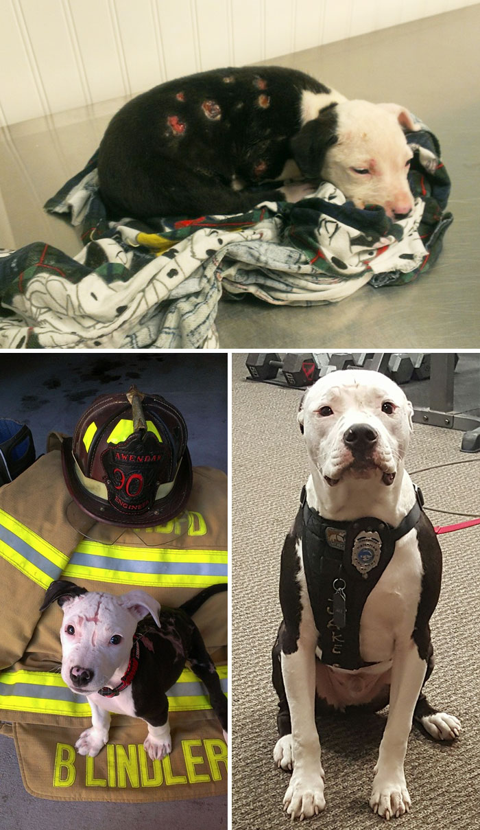 A Puppy, Who Was Saved From A Fire And Suffered Burns To 75% Of His Body, Including His Paw Pads, Was Adopted By A Firefighter And Became One Too
